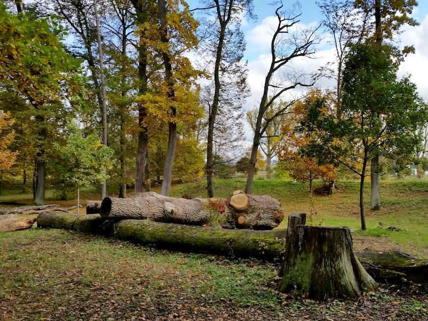 Letzte Ruhestätte alte Eiche aus Altem Botanischen Garten im Hainpark Bamberg (bei der Eichenbockstele an der Buger Spitze).