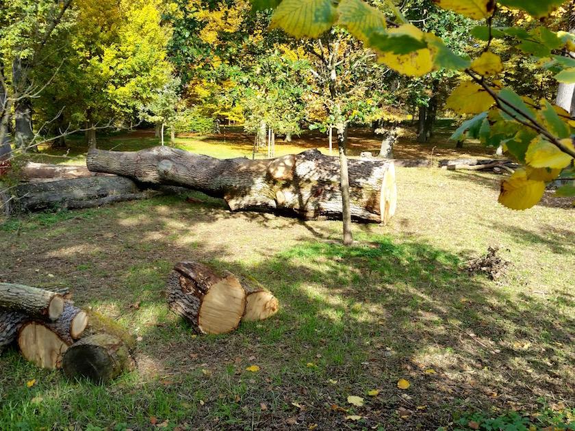Letzte Ruhestätte der Eiche aus Altem Botanischen Garten