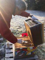 Oxalsäurebehandlung eines Bienenvolkes an der Sternwarte Bamberg