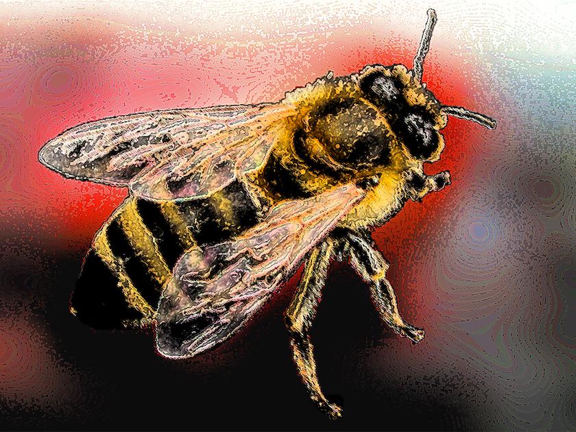 """Symbolbild """"Biene in Gefahr"""""""