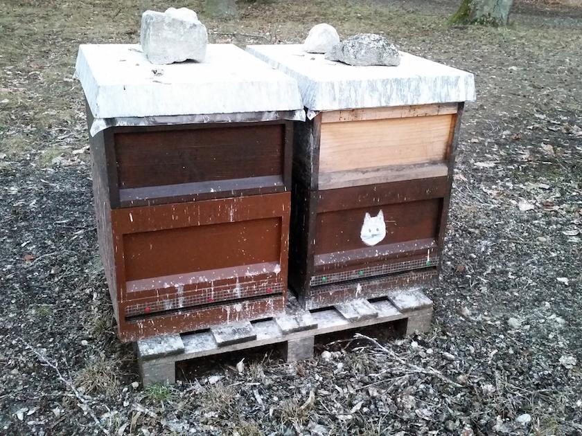Kormoranhinterlassenschaft auf unseren Bienenstöcken