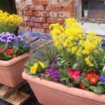 Blumenkästen-Hofstadtgärtnerei für Saisonstart Bienen-InfoWabe