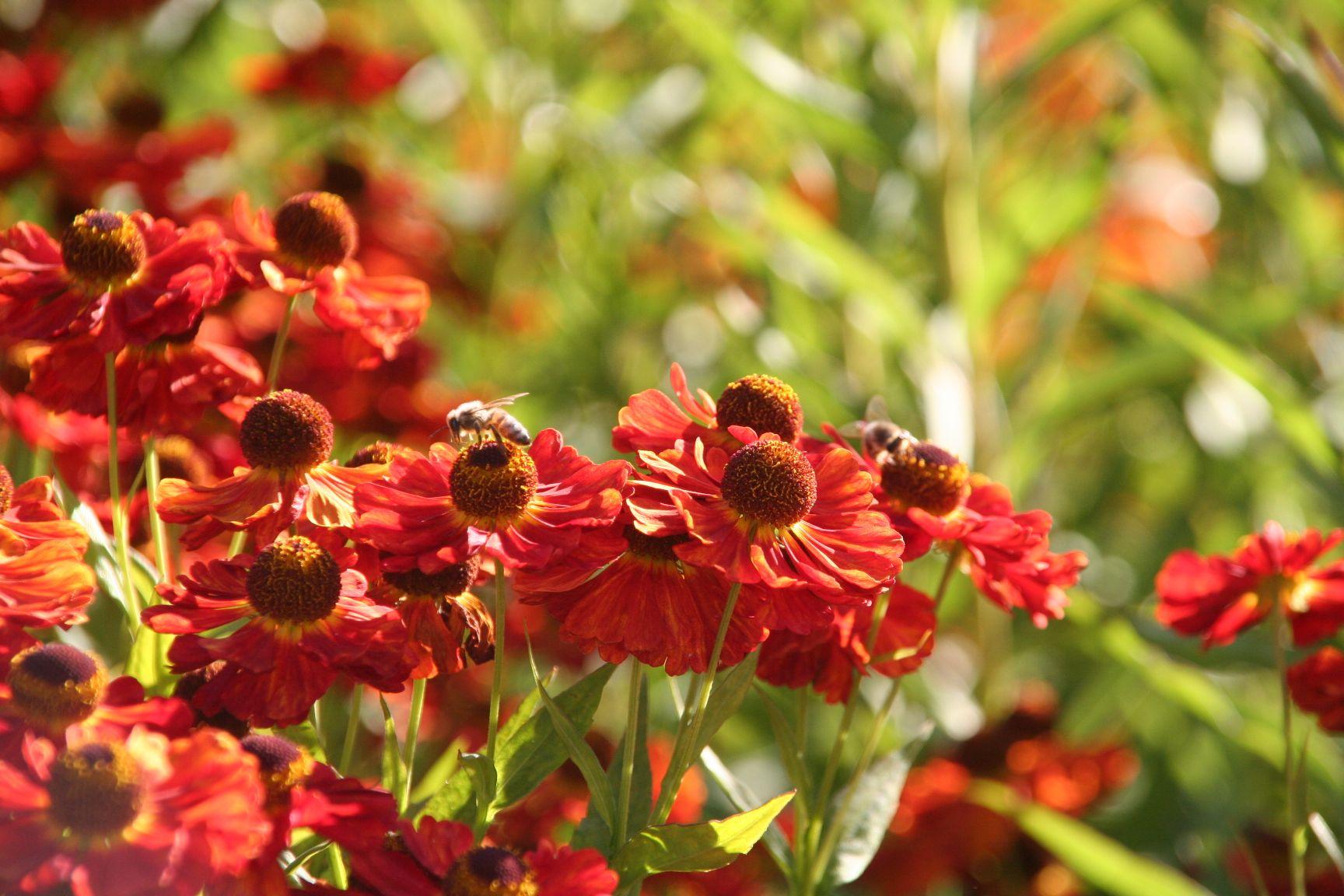 Einladung Vortrag Bienenfreundliche Blumen In Garten Und Balkon