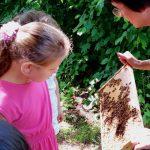 Schüerin betrachtet Bienen am Lehrbienenstand