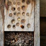 Ein kleines, jedoch erfolgeiches Wildbienenhotel von unserem Balkon