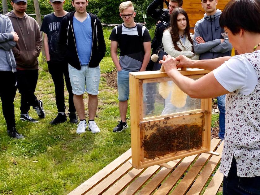 Schaufensterbeute mit Bienen