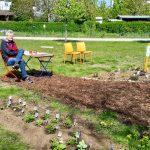 Ruheplatz an den Schaubeeten der Bienen-InfoWabe