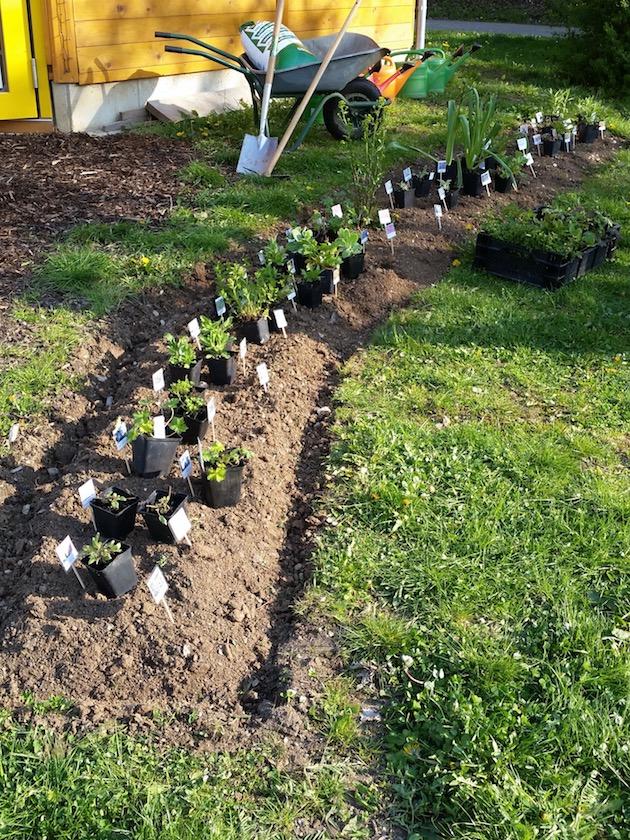 Alles bereit zum Bepflanzen des Schau-Staudenbeets an der Bienen-InfoWabe