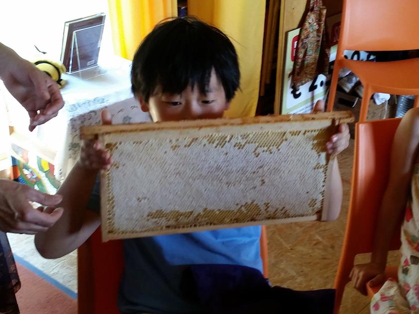 Schüler schnuppern an Honigwabe