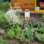 Schau-Kräuterbeet im Bamberger Bienengarten der Bienen-InfoWabe