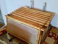 Honigwaben vor dem Entdeckeln