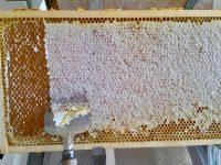 Entdeckeln einer Honigwabe aus den Buger Wiesen