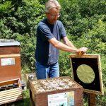 Entfernen der Bienenflucht am Volk Sabine Gründler