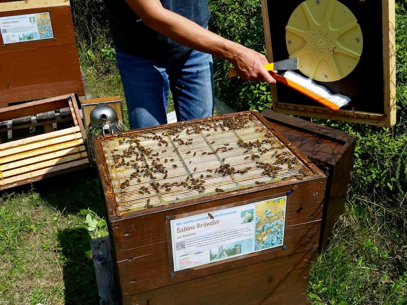 Blick in Volk von Bienenpatin Sabine Gründler