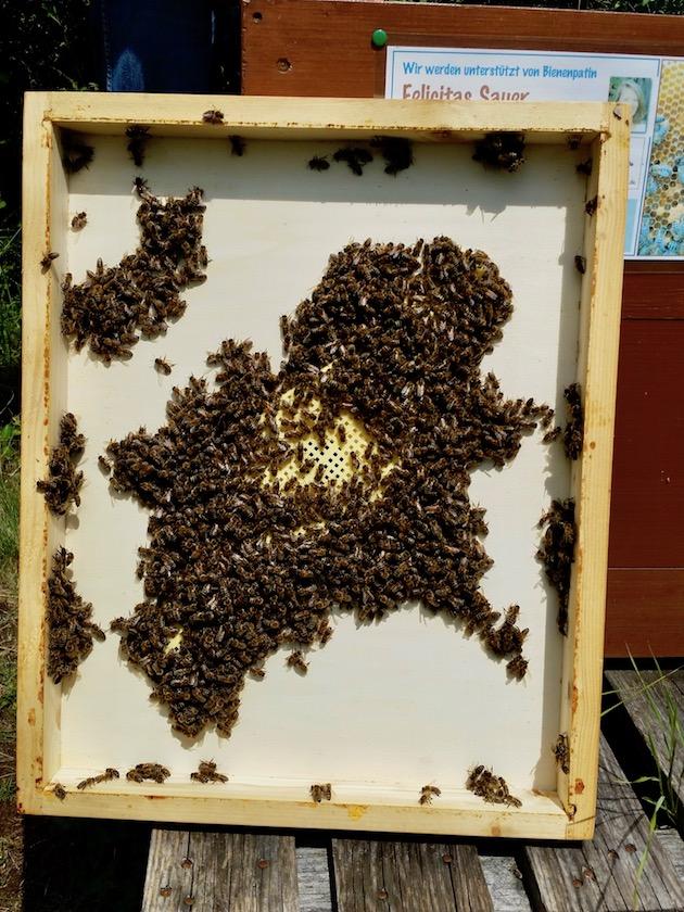 Bienenflucht, an der Unterseite mit Bienen