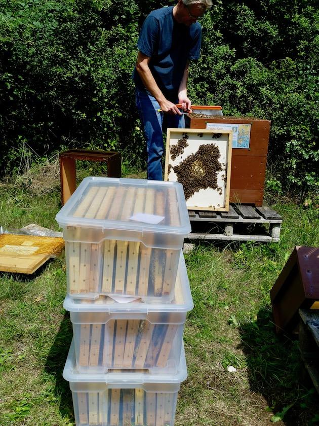 Geerntete Honigwaben im lebensmittelechten Plastikwannen