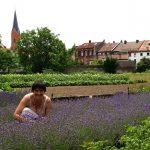 Duftprobe im Lavendelfeld
