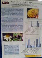 Masterarbeit zur Wildbienenfauna