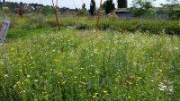 Schau-Bienenweiden auf dem Versuchsgelände der LWG Veitshöchheim