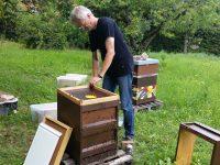 Entfernen der Bienenflucht