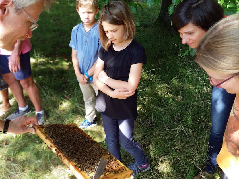 Am Lehrbienenstand, Begegnung mit Bienen