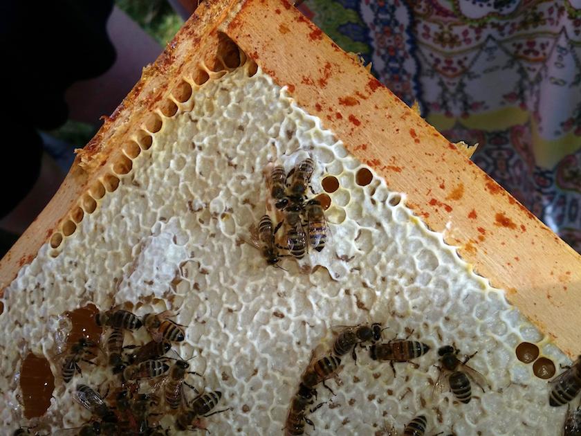 Honigwabe mit Bienen