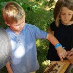 Am Lehrbienenstand, Honig naschen