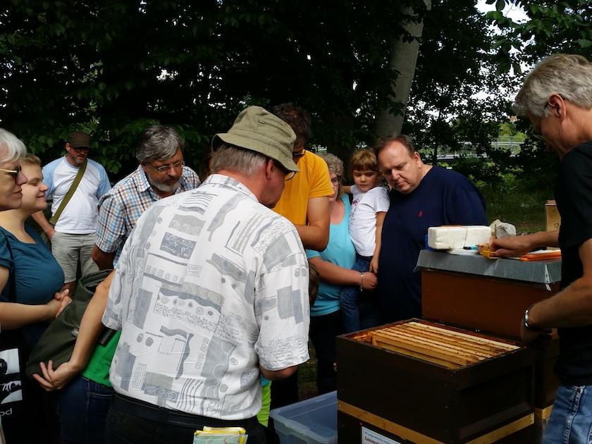 Blick in die Bienenbeute