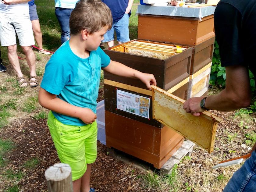 Junge erntet Honigwabe