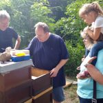 Gast erntet Honigwabenernte