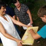 Schlecken aus der Honigwabe