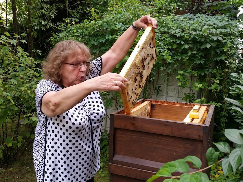 Biggi entnimmt eine Honigwabe aus der Beute