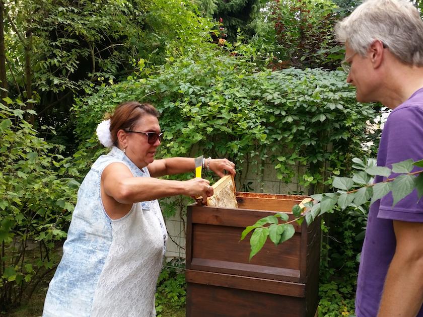 Jeannette entnimmt eine Honigwabe aus der Beute