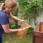 Rita kehrt Bienen von der Honigwabe ab
