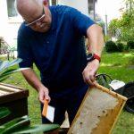 Stefan kehrt Bienen von der Honigwabe ab
