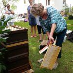 Elke kehrt Bienen von der Honigwabe ab