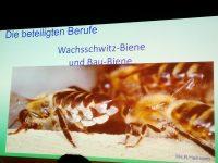 Folie Wachsschwitz-Biene