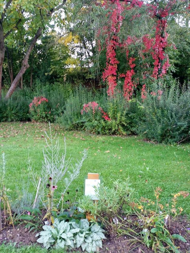 Staudenbeet 2, Bamberger Bienengarten im Herbstflor, Staudenbeet 2