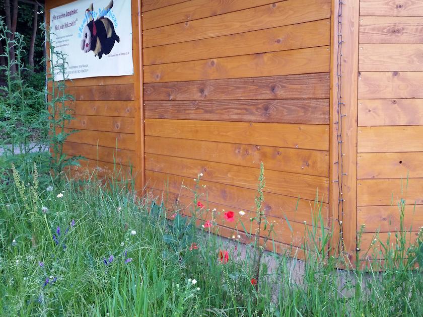 Spontanbewuchs im Bamberger Bienengarten an der Bienen-InfoWabe