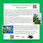 Tafel Blaseneschen im Bamberger Bienengarten
