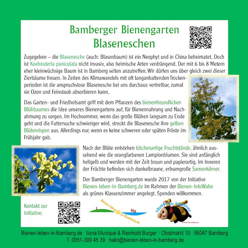 Arbeitsblatt Bienen Grundschule : Arbeitsblatt vorschule bienen unterrichtsmaterial