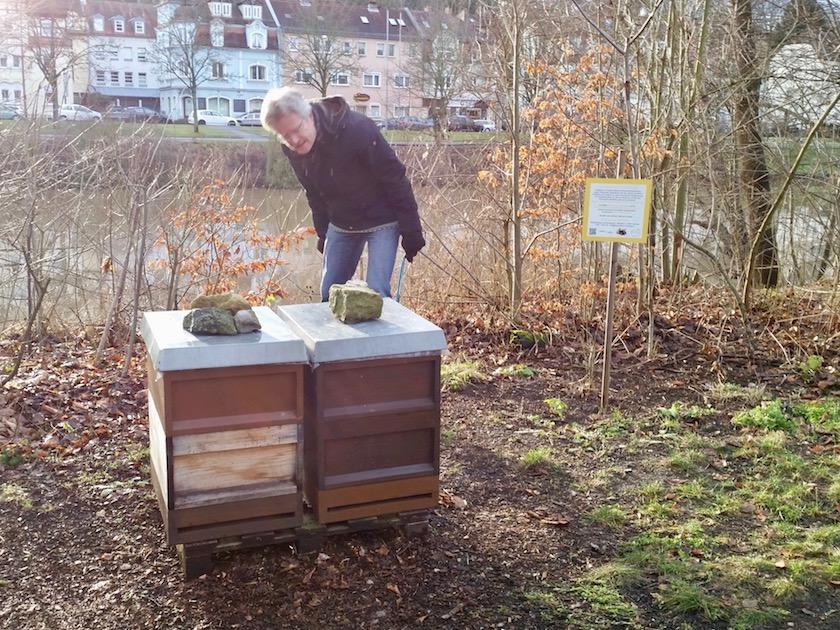 Kontrolle der Bienenvölker im Erba-Park