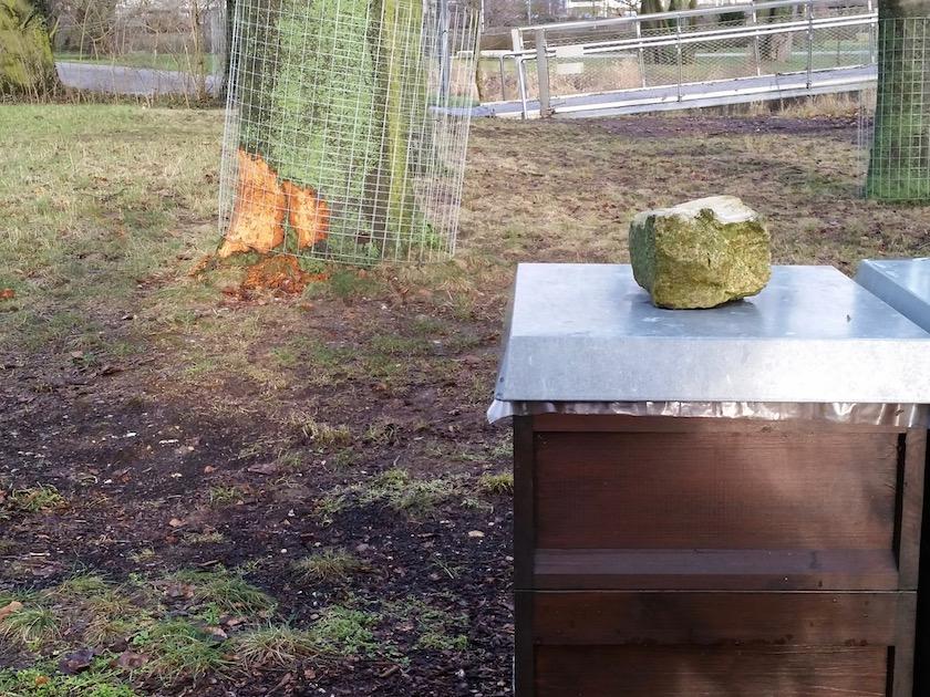 Bibernagespuren im Erba-Park unweit unserer Bienenvölker