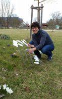 Einstecken der botanischen Pflanzetiketten im Bamberger Bienengarten