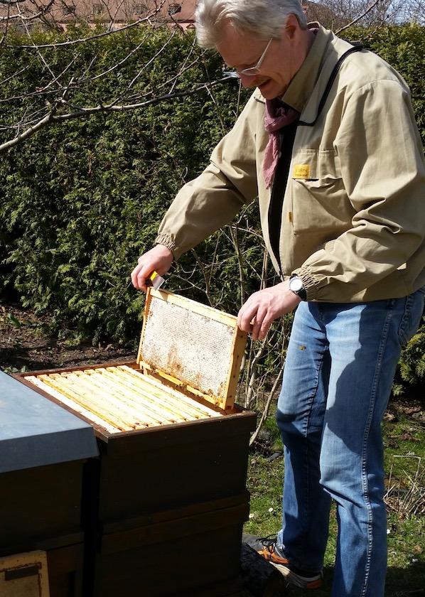 Wabenkontrolle Schiffbauplatzbienen, Einsetzen einer Futterwabe