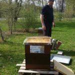 Ingo Schmitt am Lehrbienenstand Bienenweg zur BIWa-Sonntagsöffnung