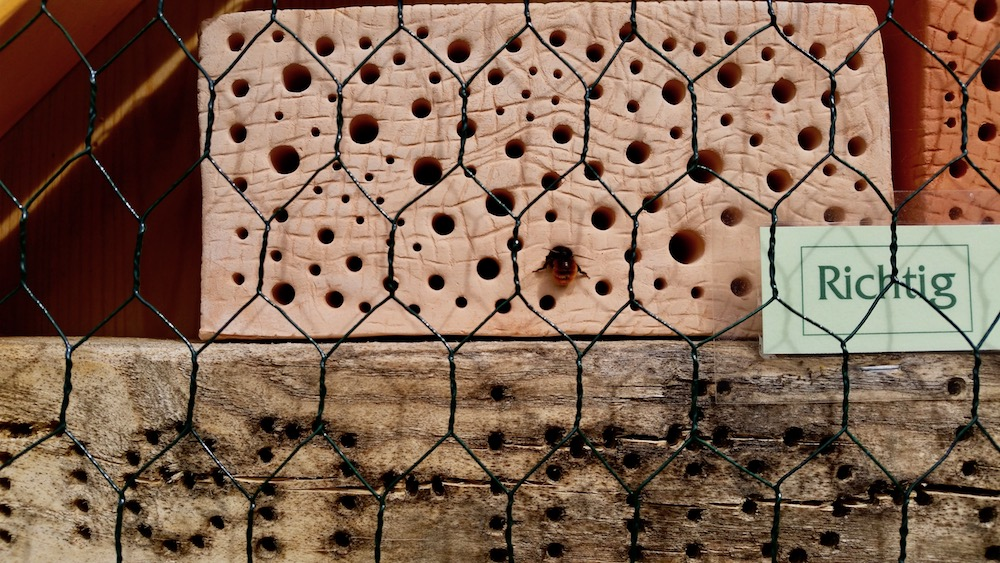 Wildbienenhotel im Bamberger Bienengarten, mit Gehörnter Mauerbiene