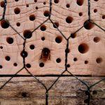 Wildbiene im Wildbienenhotel am Bienenweg, Bamberg