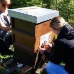 "Uni-Bienen am Lehrbienenstand ""Bienenweg"""