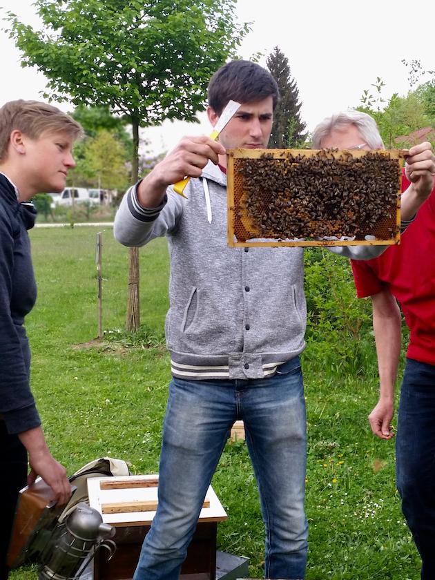 "Weiselkontrolle am Lehrbienenstand ""Bienenweg"""